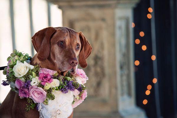 cachorros-no-casamento 10