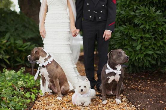 cachorros-no-casamento 3