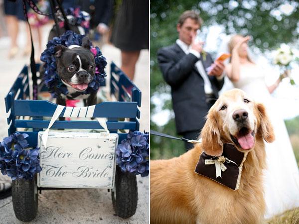 cachorros-no-casamento 5