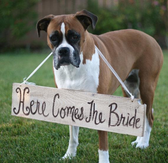 cachorros-no-casamento 6