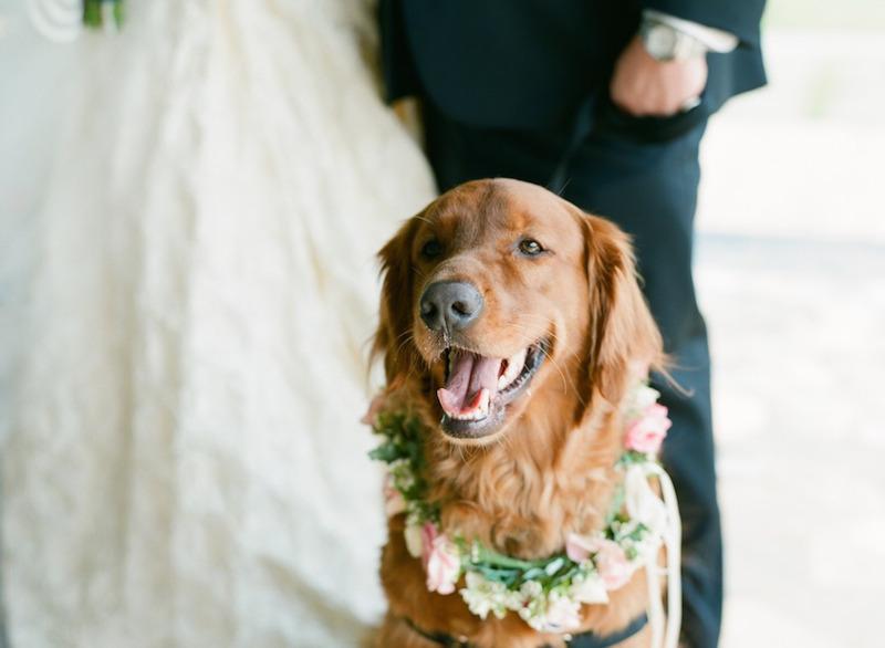 cachorros-no-casamento 7