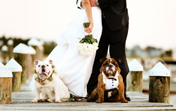 cachorros-no-casamento 9