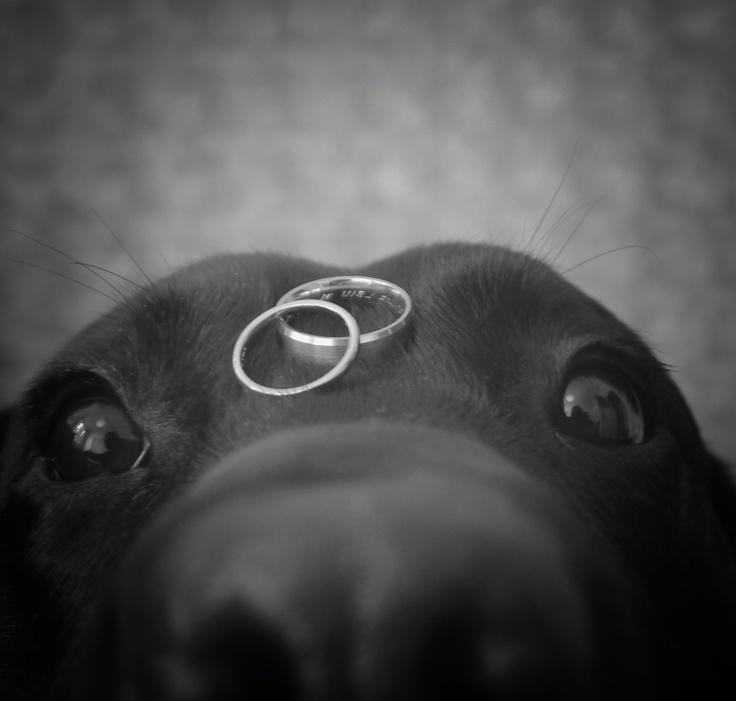 cachorros-no-casamento