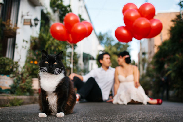cat-engagement-photo