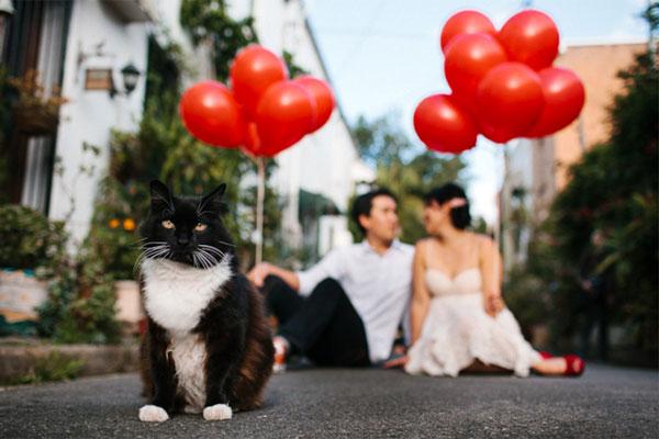 cat-engagement-photo