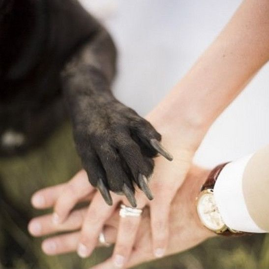 Cute-Wedding-Pets-27