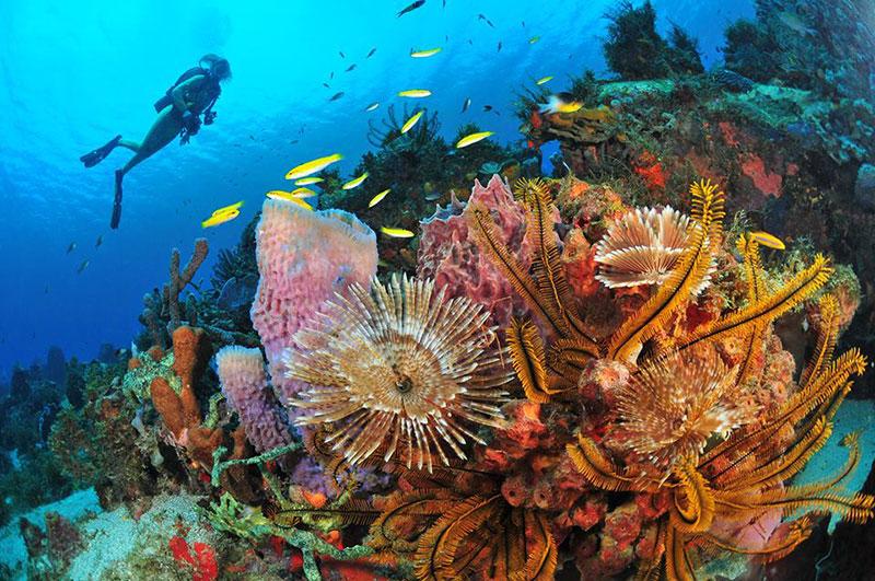 mergulho na lua de mel na Martinica TM Travel