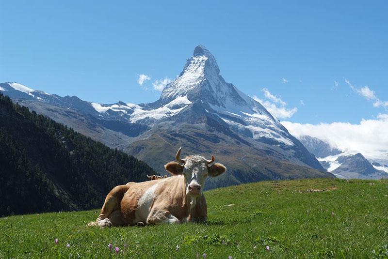 lua-de-mel-em-zermatt-suica-lejour-23